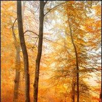 Осень... :: Юрий Гординский