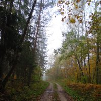 Утро в лесу. :: Людмила Ларина