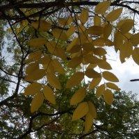 осень :: Giant Tao /