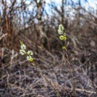 Весна :: Ирина Никифорова