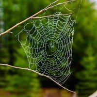 Утренних слез паутина.... :: Юрий Харченко