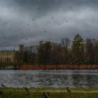 Большой Гатчинский дворец :: Таня Бакулина