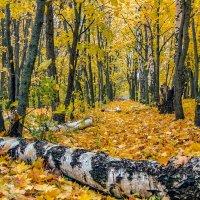 Осенняя аллея :: Юрий Стародубцев