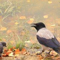 Расскажите, птицы, мне об осени :: Татьяна Ломтева