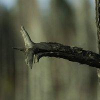 Дракон древесный :: Владимир Шустов