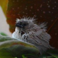 птах :: Татьяна Малафеева