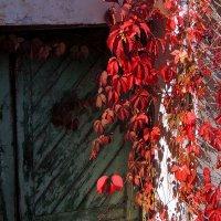 осень :: ВАДИМ СКОРОБОГАТОВ