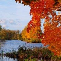 Осень в красках. :: Алексей Жуков
