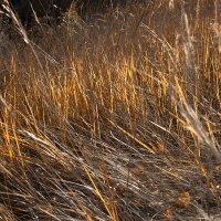 В осенних травах догорает осень... :: Лилия *