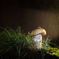 Маленький грибник... :: Тамара Морозова