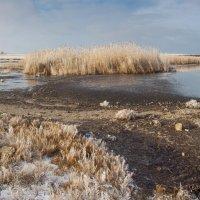 Морозный берег :: Алина Шостик