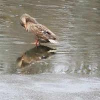На пруду Лосиного острова :: marmorozov Морозова