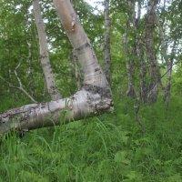 природа Камчатки :: Дмитрий Солоненко