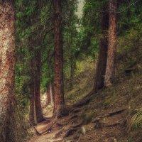 Таинственные горные тропы :: Julia Martinkova