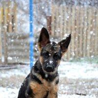Первый снежок...)) :: Алёна PRIVALOVA