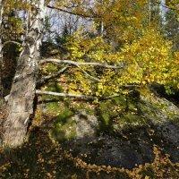 Прощай зеленая листва, до следующего года...! :: Swetlana V