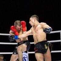 Бойцы киокушинкай в профессиональном кикбоксинге :: Александр Колесников