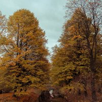 Осенняя пора :: Alexandra G.