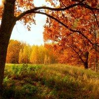 под тенью осеннего дуба :: Александр Прокудин
