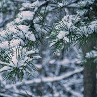 Первый снег :: Олег Архипов