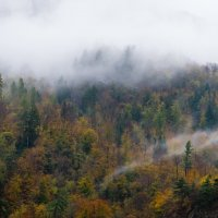 осенние краски леса :: Vasiliy V. Rechevskiy