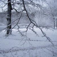 _Зима первый снег :: Анна Воробьева