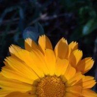 САдовые цветы! :: Ueptkm