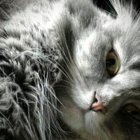 Кошки умеют наслаждаться жизнью :: Наталия Каминская