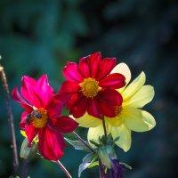 Букет цветов осенних.. :: Андрей Нибылица
