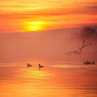 Закат -  это не атмосферное явление, а завершение удачного дня... :: Лилия .