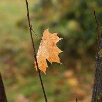 Не уходи, пора листопадная :: Татьяна Ломтева