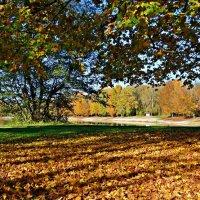 Чудесная, тихая осень... :: Galina Dzubina
