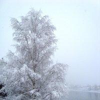 """такого снегопада"" :: Р о м a н"