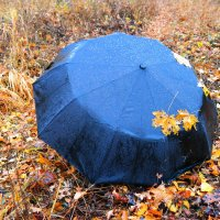 О прогулках под дождём.. :: Андрей Заломленков