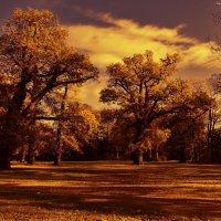 Осенний парк :: Nina Yudicheva