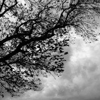Красота природы беспощадна. :: Рустам Ягафаров