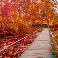 Осенний лес :: Gene Brumer