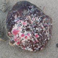 просто камешек на пляже... :: Елена Байдакова