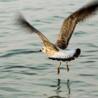 полет над водой :: Константин