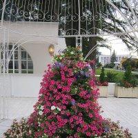 Цветы на выставке :: Дмитрий Никитин