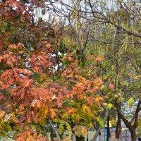 Осень. :: Анастасия Быкова