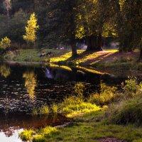 Вечернее солнце :: Елена Кириллова