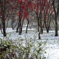 первый снег :: Dmitry i Mary S