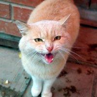 Человек культурен настолько, насколько он способен понять кошку (Бернард Шоу). :: Андрей Заломленков