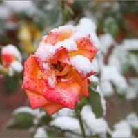 Первый снег. :: Владимир Прокопов