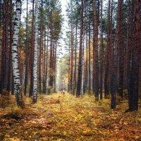 Осень в селе Петрокаменское :: Георгий Бондаренко