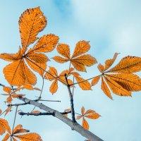 Листья осени :: Виталий