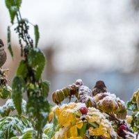 Первый снег. :: Владимир Безбородов