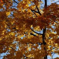 Осень золотая ... :: Алёна Савина