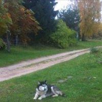 Хаски на природе :: IRINA